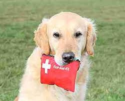 Essential First Aid Supplies For Your Pet