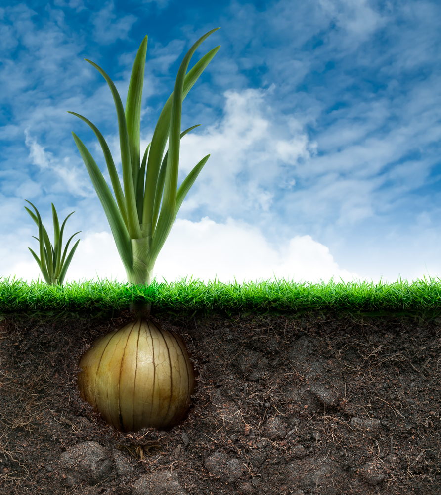 How To Test Your Soil For A Healthy Vegetable Garden