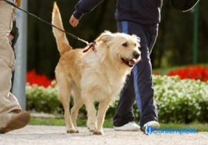 5 Benefits Of Using A Harness With Your Puppy