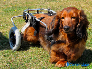 Ways To Help Your Dog Recover From Leg Injuries