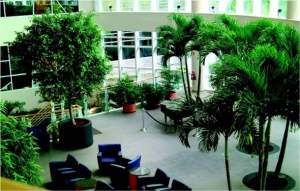 The Advantages Of Indoor Plant Hire Versus Purchasing Plants
