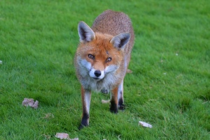 What To Do If A Wild Animal Enters Your Yard