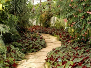 Vibrant Garden: How to Showcase Your Yard