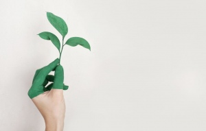 Green Living: 4 Ways to Make Your Household Eco-Friendly