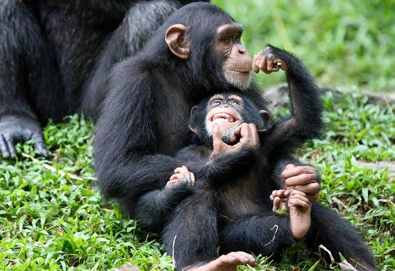 Trek for the Gorillas in Uganda